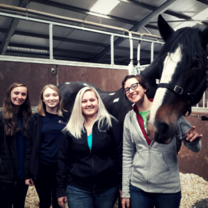 Equine Program in Scotland